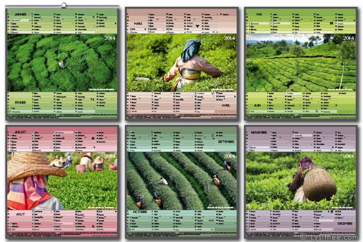 Calendrier Récolte du Thé