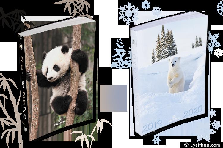 Agendas Wild Teddy Bears