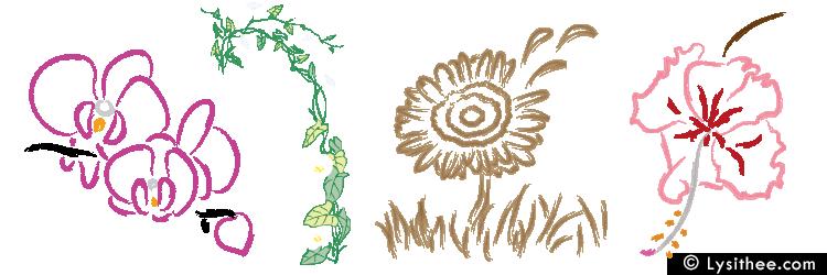 Carnet de croquis Orchidée, Liseron, Gerbera et Hibiscus